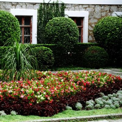 nikitsky_botanical_garden