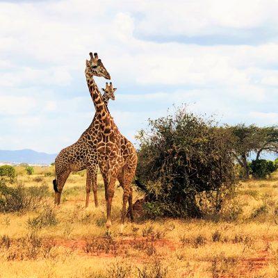 Pocztowka z Kenii - Anna Grzywacz (4)