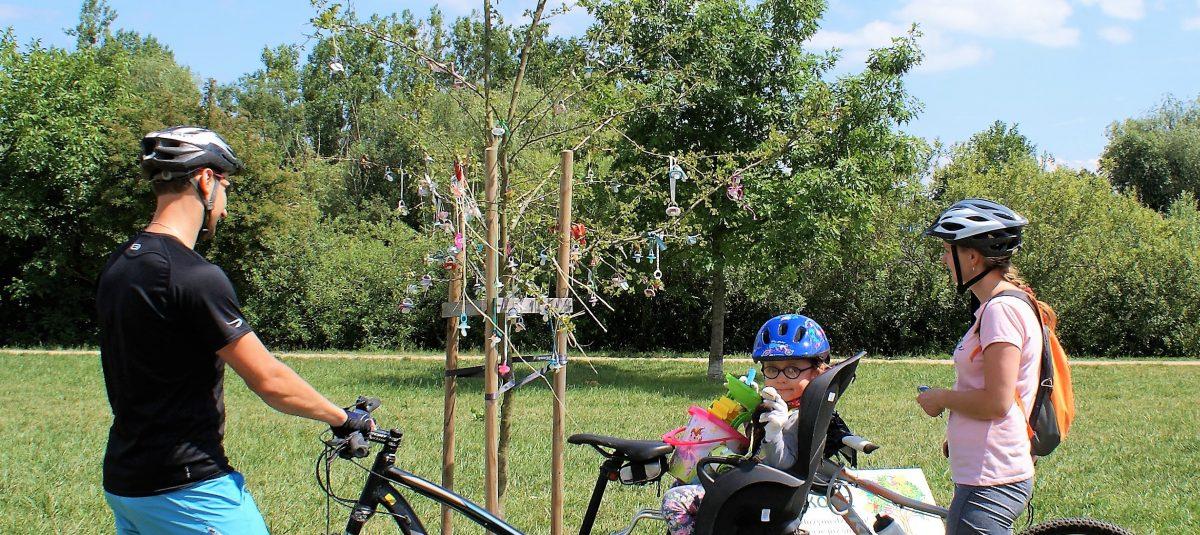 W Szczecinie rośnie smoczkowe drzewo