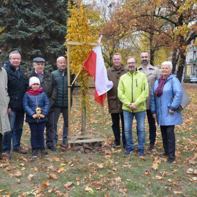Drzewo stulecia RC Grorzow Wlkp (1)