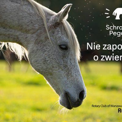 RC Warszawa Zoliborz akcja Pegasus (1)