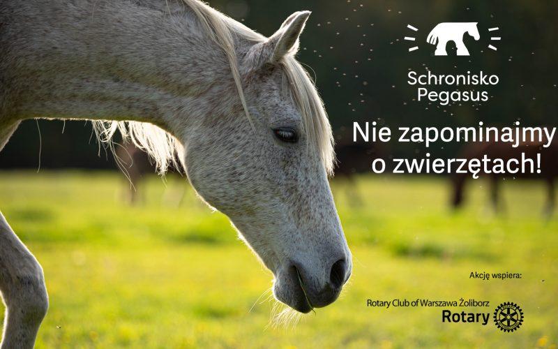 Zostań bohaterem Pegasusa!